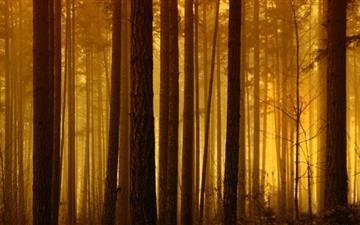 Foggy Forest Sunrise Mac wallpaper