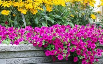 Moril Beautiful Flowers Mac wallpaper