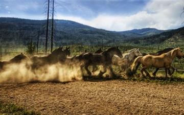Horses Running Mac wallpaper