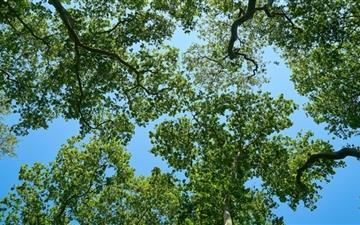 The Trees Mac wallpaper