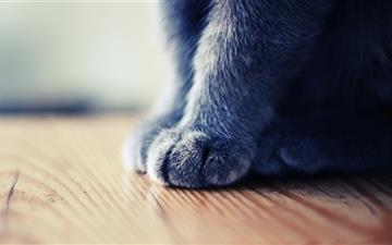 Grey Paws Mac wallpaper