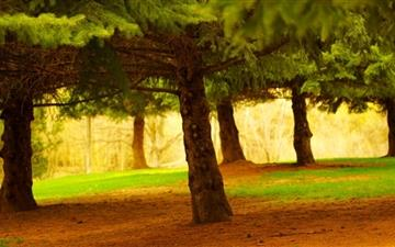 Pine Trees Mac wallpaper