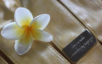 Magnolia flower on clothes Mac wallpaper