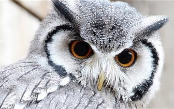 Cute Owl Mac wallpaper