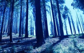Night Trees Blue  Mac wallpaper