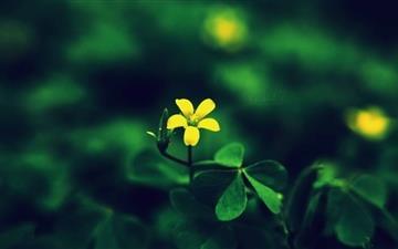 Yellow Flower Mac wallpaper