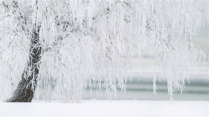 White Tree Mac Wallpaper