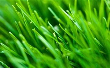 Green Grass Background Mac wallpaper