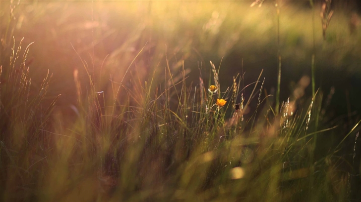 Two Yellow Flowers And Grass Mac Wallpaper