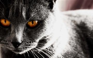 Dark Cat Mac wallpaper