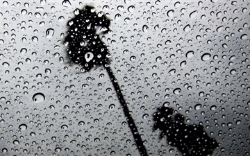 Palm Trees In The Rain Mac wallpaper