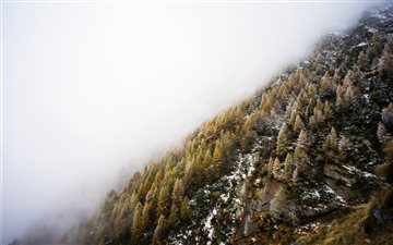 Fog over winter hillside Mac wallpaper