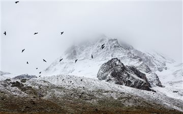 Birds flocking in the Alp... Mac wallpaper