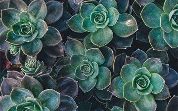 Succulent Joy Mac wallpaper