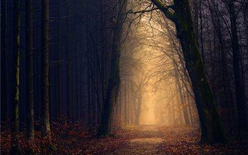 Golden forest pathway Mac wallpaper
