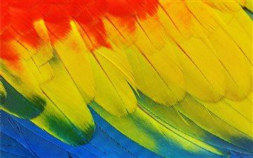 Scarlet Macaw plumage Mac wallpaper