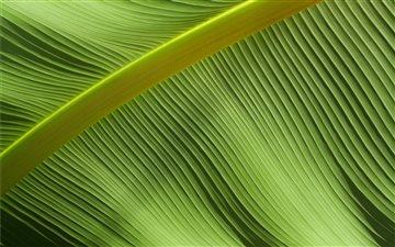 Macro shot of leaf Mac wallpaper