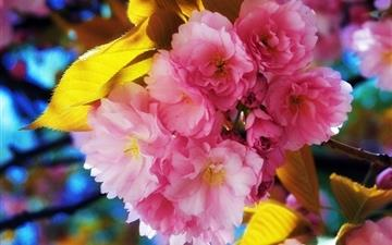 Beautiful Flowers Mac wallpaper