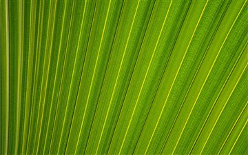 Parallel lines on a leaf Mac wallpaper