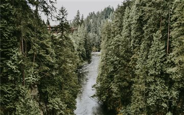 River in evergreen woods Mac wallpaper
