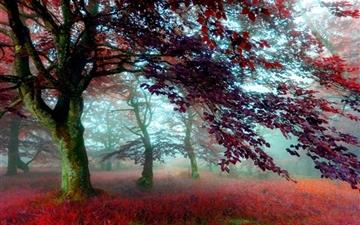 Red Effect Autumn Forest Mac wallpaper