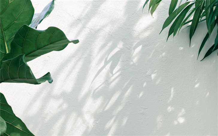 Plants at a botanical gar... Mac Wallpaper