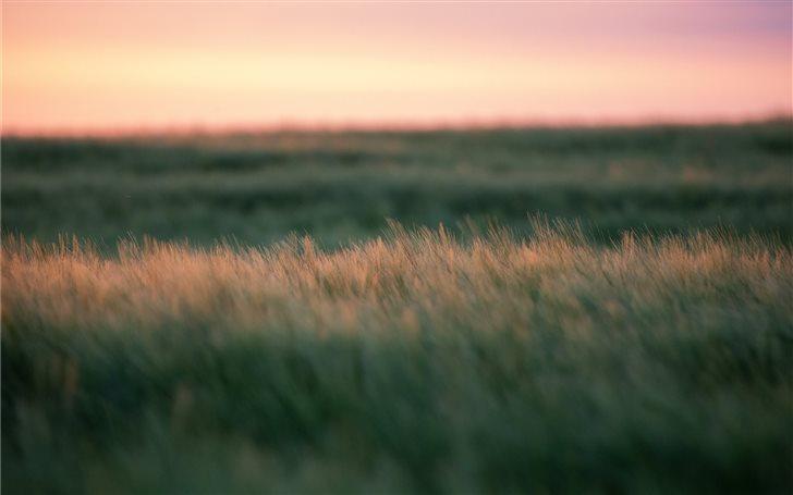 Sunset Field Mac Wallpaper