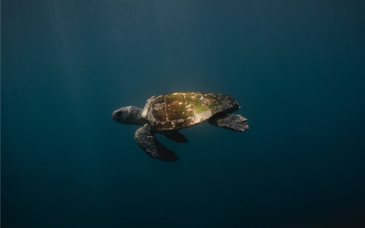 Green Turtle Mac Wallpaper