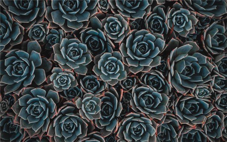 teal flowers Mac Wallpaper