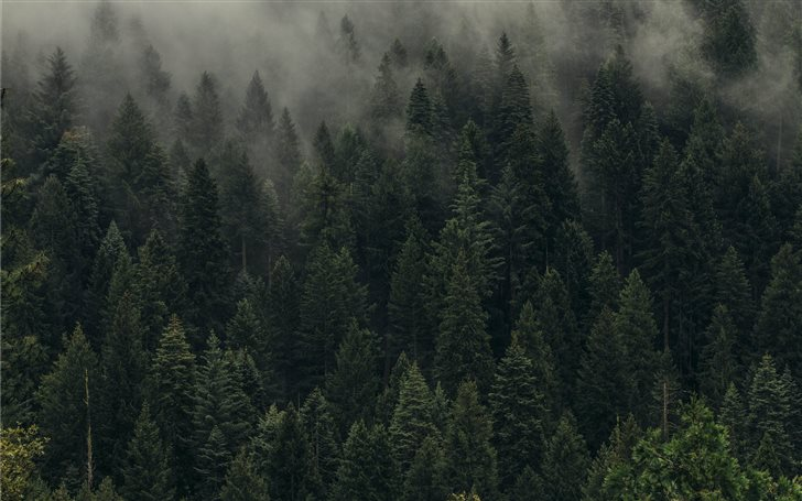 aerial view of pine trees... Mac Wallpaper