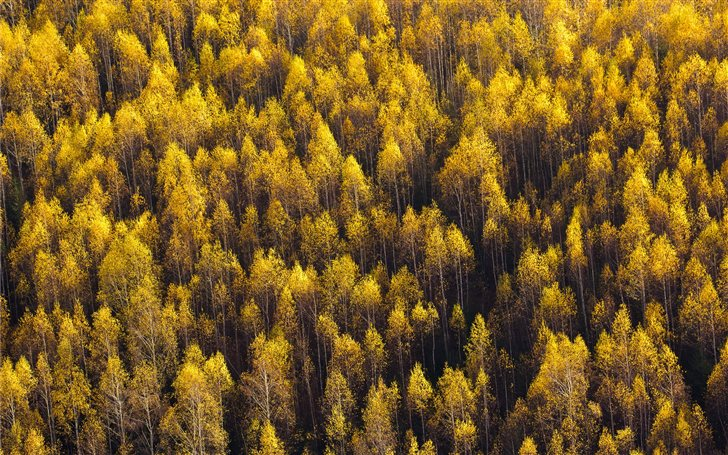 aerial view of forest Mac Wallpaper