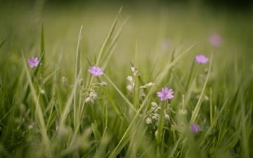 Meadow And Flowers All Mac wallpaper