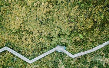 aerial photo of jungle Mac wallpaper