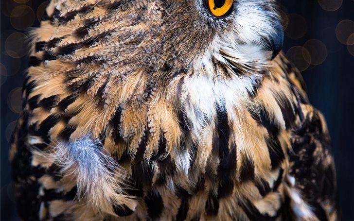 Owl Mac Wallpaper