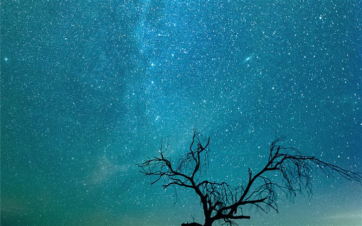 Lonely Tree At Night Mac Wallpaper