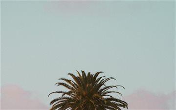 Sunset Palm Mac wallpaper