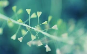 Nature Bokeh All Mac wallpaper