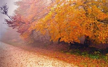 Foggy Autumn Morning Mac wallpaper