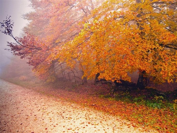Foggy Autumn Morning Mac Wallpaper
