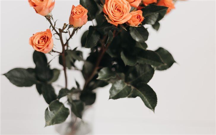 Vivid Bouquet Mac Wallpaper