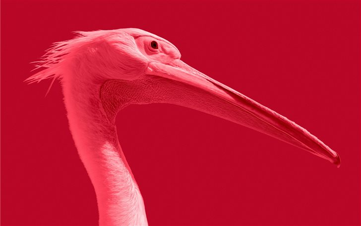 Pink pelican Mac Wallpaper