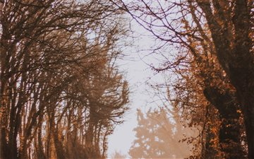 bare trees during daytime Mac wallpaper