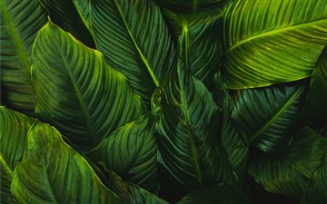 green-leafed plant Mac wallpaper
