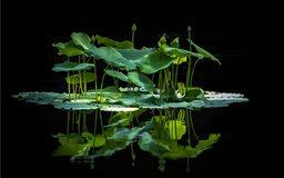 Aquatic Jungle