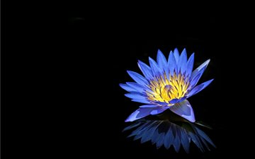 Blue Water Lily Mac wallpaper