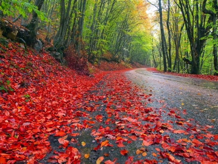 Rainy Autumn Forest Mac Wallpaper