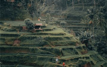 Tegalalang Rice Terrace, ... Mac wallpaper