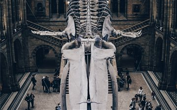 Natural History Museum, L... Mac wallpaper