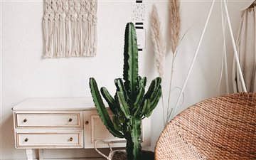 Cactus and Interior love ... All Mac wallpaper