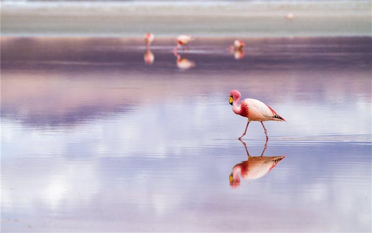 Laguna Colorada, Salar de... Mac Wallpaper